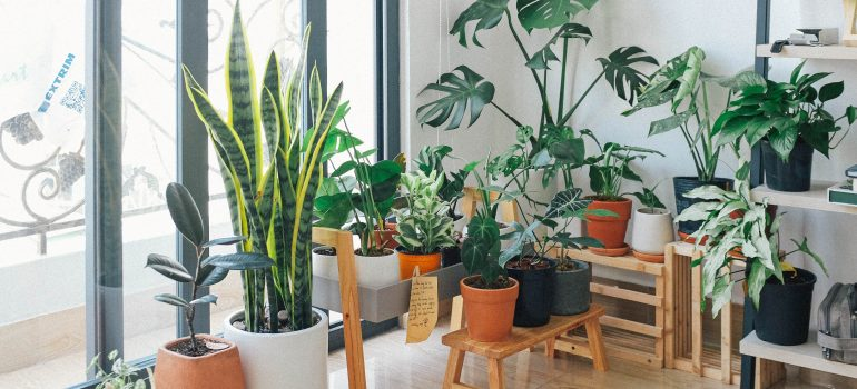 A guide to propagating a monstera plant